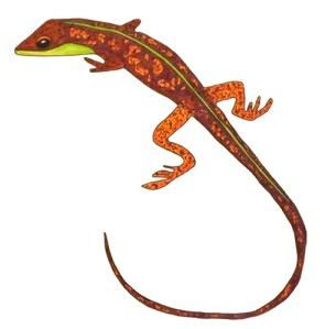 SalamanderScan-websmall